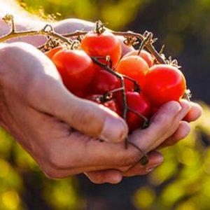 Seed Food Forward