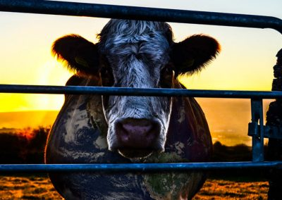 Cowspiracy: The Sustainable Secret