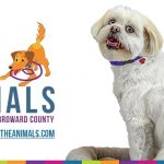 31st Annual VCA Walk for the Animals